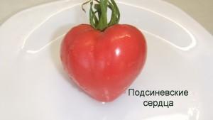 подсиневские сердца1 (1)
