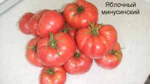 яблочный минусинский1 (12)