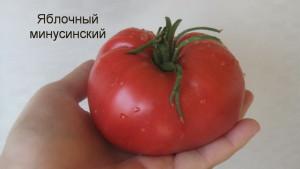 яблочный минусинский1 (14)