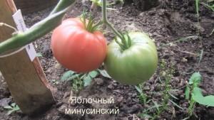 яблочный минусинский1 (33)