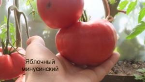 яблочный минусинский1 (9)