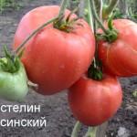 властелин минусинский (3)