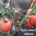 чудо земли новое (4)
