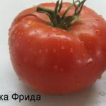 бабушка фрида (3)