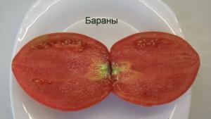 бараны1 (3)