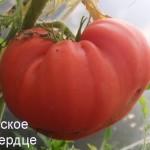 болгарское бычье сердце