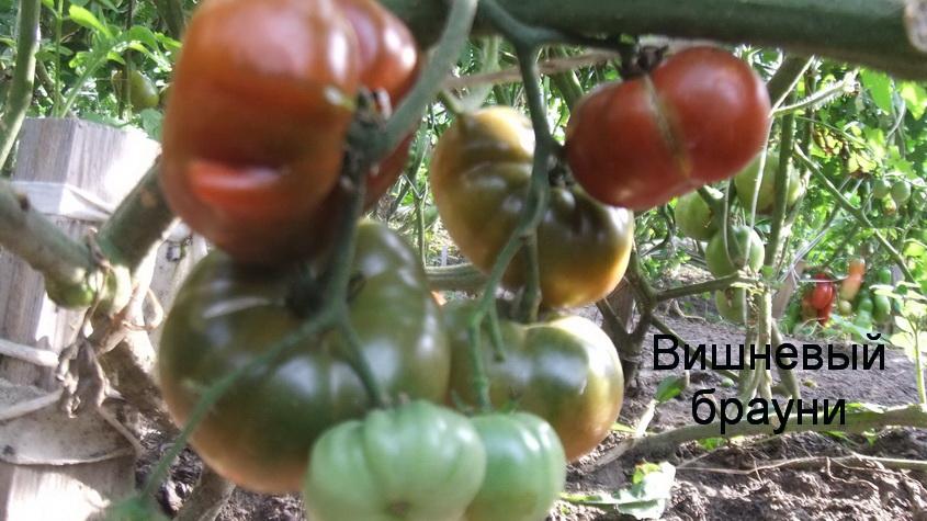 вишневый брауни (1)
