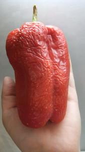 геркулес красный (1)