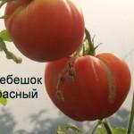 гребешок красный (6)