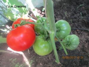 грик домата