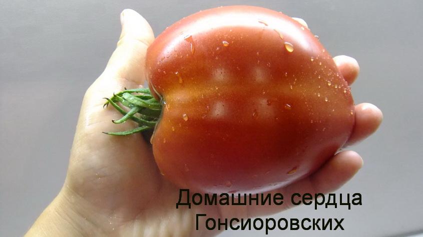 домашние сердца гонсиоровских (3)