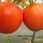 краснодарский гигант1 (2)