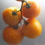 круглый апельсин пэга (2)