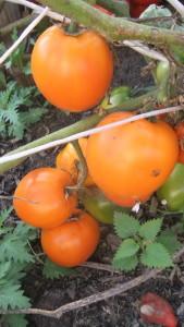 мармелад оранжевый (2)