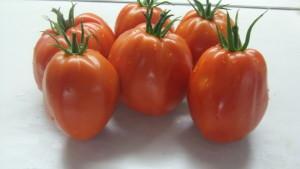 минусинский бочковой красный (6)