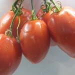 подсинская лиана (7)