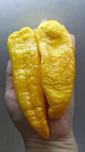 корнито желтый (1)
