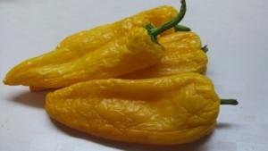 корнито желтый (2)
