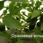оранжевая вспышка (4)