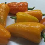 оранжевая вспышка (7)