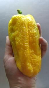 пето чудо оранжевое (1)