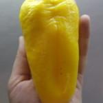 рафаэль желтый (1)