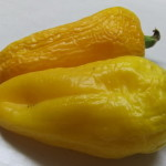 рафаэль желтый (2)