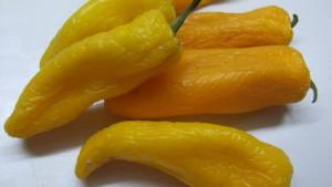 бенгальский желтый (3)