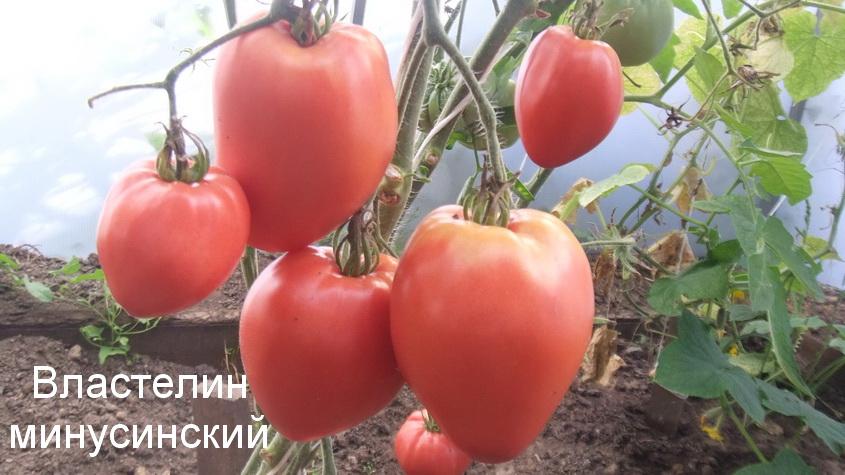 властелин минусинский (1)