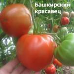 Башкирский красавец
