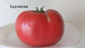 буднакова