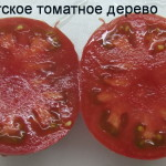 гигантское томатное дерево (4)
