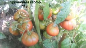 коричневый карлик №9 (1)