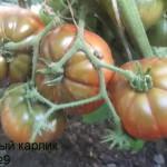 коричневый карлик №9 (2)