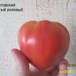 литовский хохлатый 1 (8)