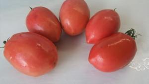 перцевидный крепыш (2)