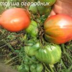 петруша-огородник1