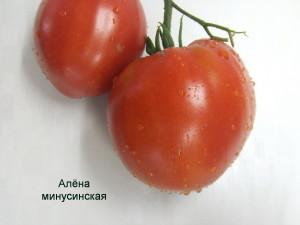 алена минусинская (3)