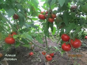алеша попович (2)