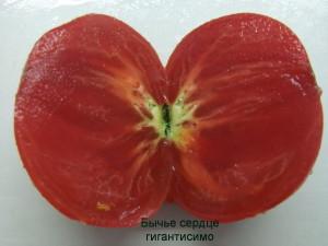 бычье сердце гигантисимо (1)