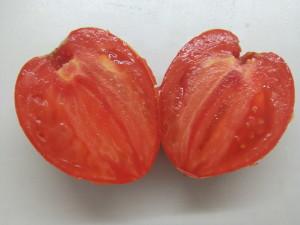грушанка минусинская (9)