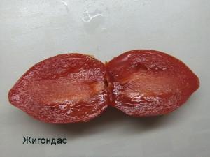 жигондас (4)