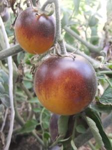 золотая лесная яблоня (1)