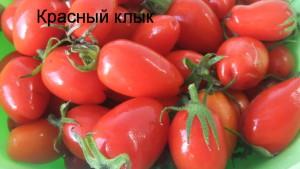 красный клык (2)