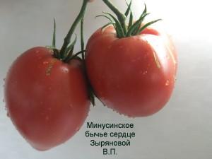 минусинское бычье сердце зыряновой (5)