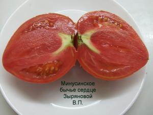 минусинское бычье сердце зыряновой (7)