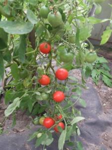 непоседа том красный (3)