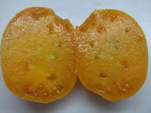 саяногорский великан оранжевый (1)