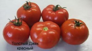 толстый джек красный (1)