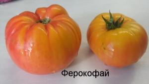 ферокофай (1)